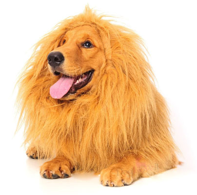 lion-mane-for-dog