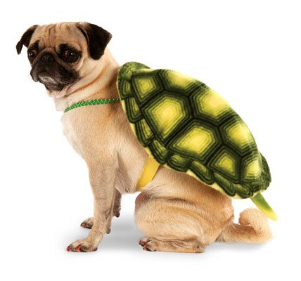 Turtle Shell Pet Backpack
