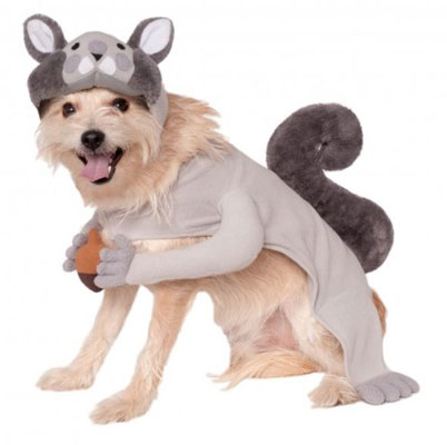 squirrel-pet-costume