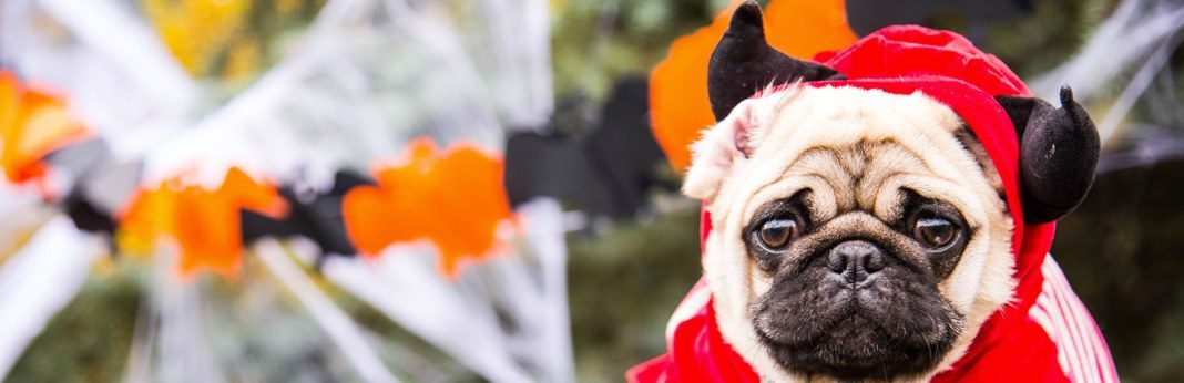best dog costumes for halloween and everything else