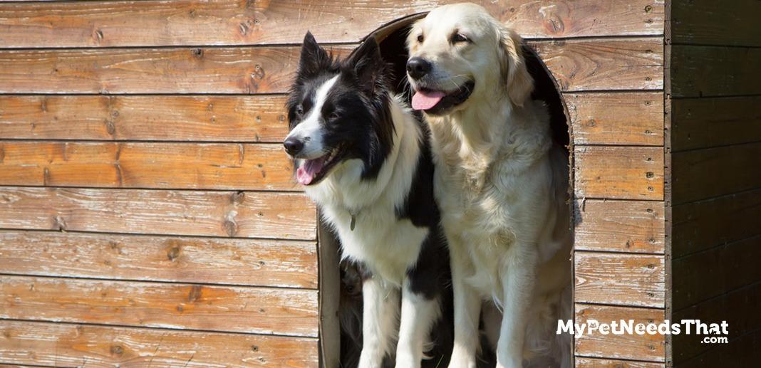 best-dog-kennels