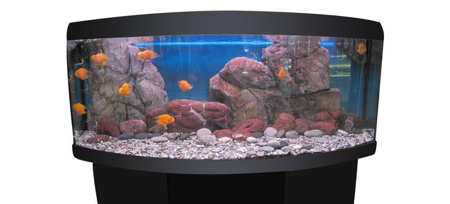 considerations in buying an aquarium