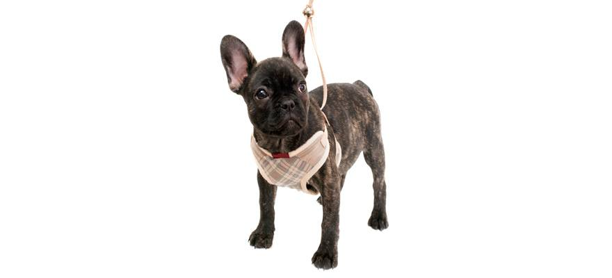 dog harness buying guide
