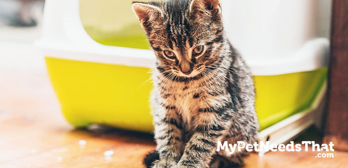 best self cleaning litter boxes