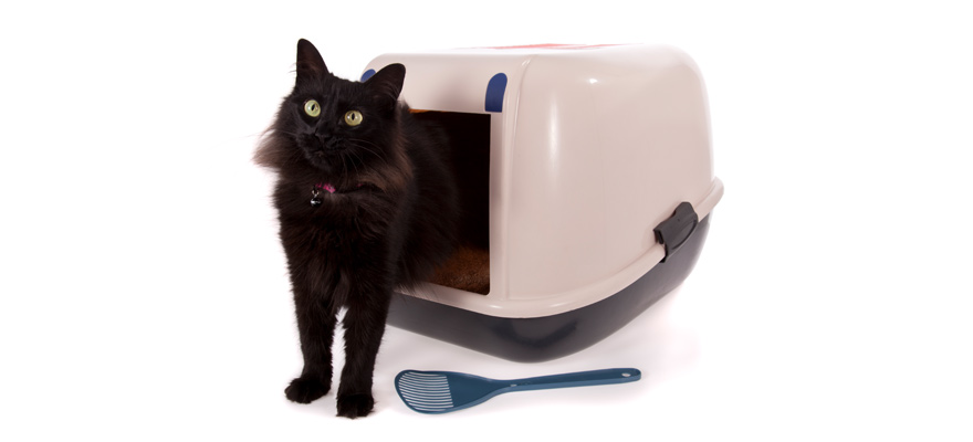 How Does a Self-Cleaning Cat Litter Box Work?  sc 1 st  My Pet Needs That & 8 Best Self-Cleaning Litter Boxes In 2018 | Review Aboutintivar.Com