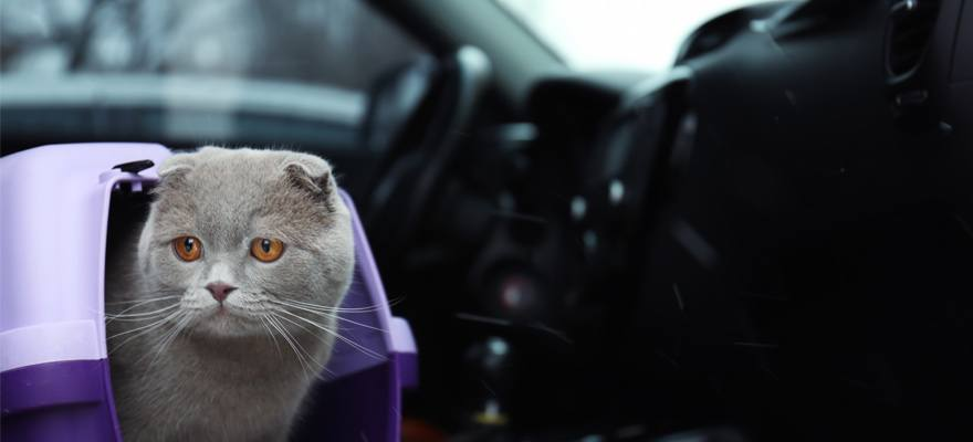 how to safely travel with your cat