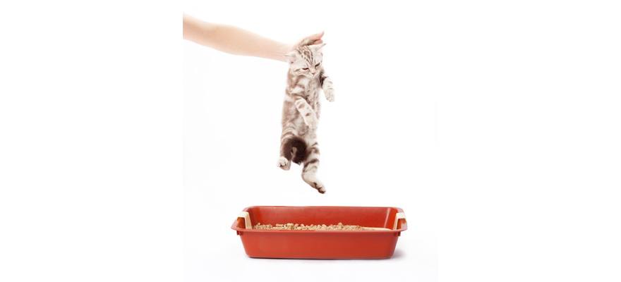 how to train a cat to use it's cat litter