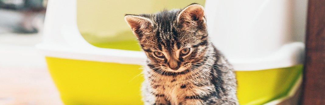 How to Make an Efficient Cat Litter Box Setup