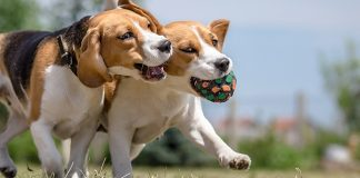 best joint supplements dogs
