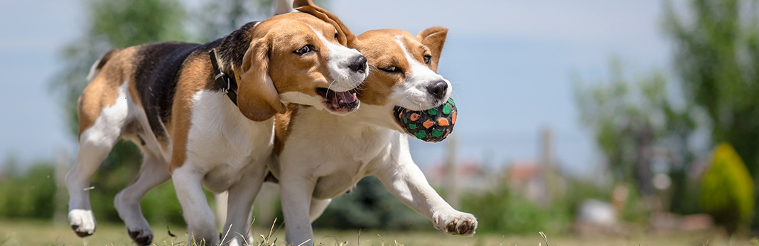 Best Joint Medication For Dogs