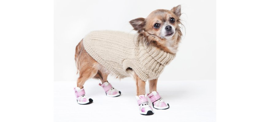 uses and benefits of footwear for canines