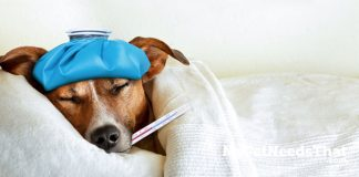 dog flu explained