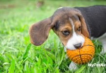 Best Chew Toys For Puppies