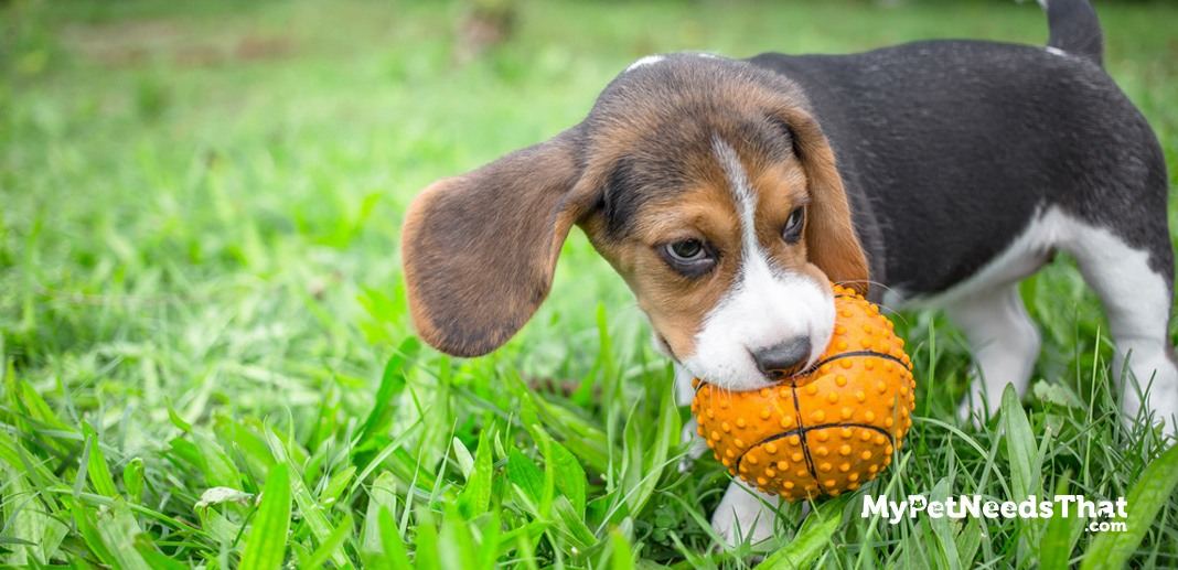 Best Pet Insurance For Dogs Dental