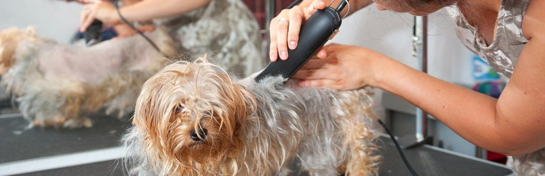 15 best dog grooming clippers in 2018 solutioingenieria Image collections