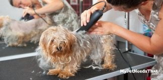 Dog Grooming Clippers