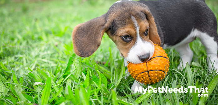 best chew toys for dogs