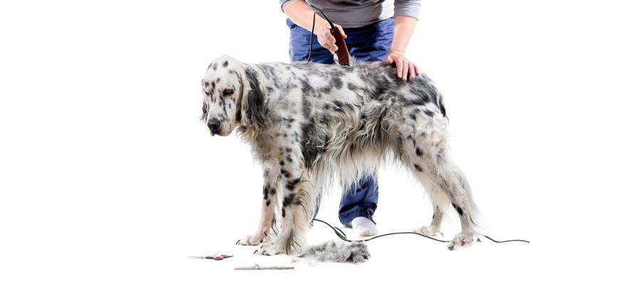 grooming strengthens or reinforces the special bond that you have with your pet