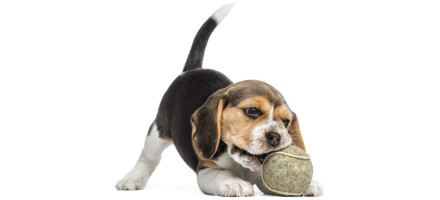 Best Chew Toys For Puppies In 2019 Puppy Chew Toy Reviews