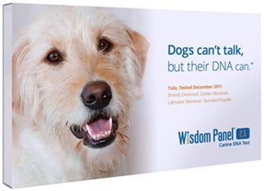 Mars Veterinary Wisdom Panel 2.5 Breed Identification DNA Test Kit