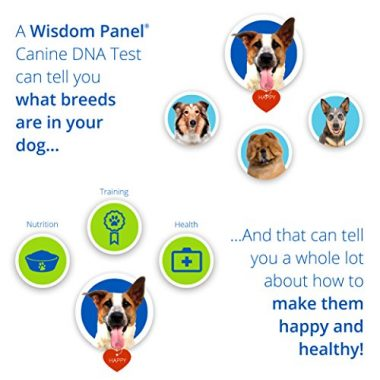 Mars Veterinary Wisdom Panel 3.0 Breed Identification DNA Test Kit