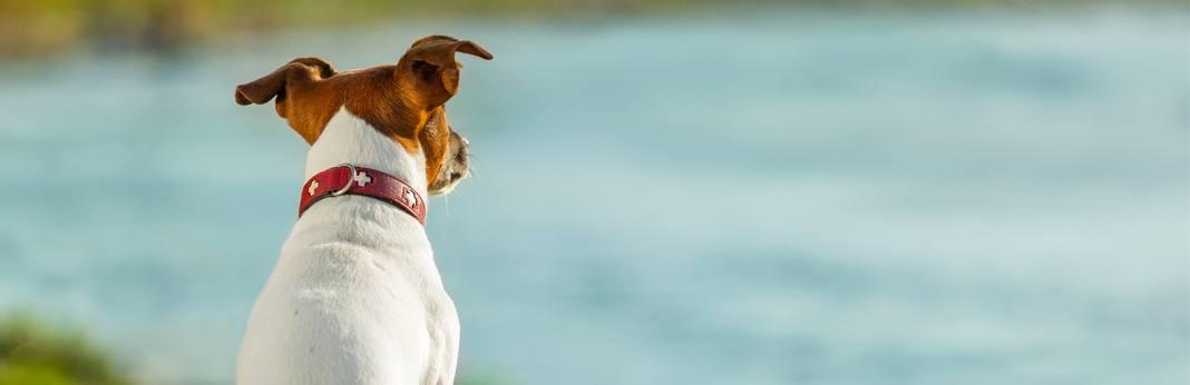 dog-dna-testing-explained