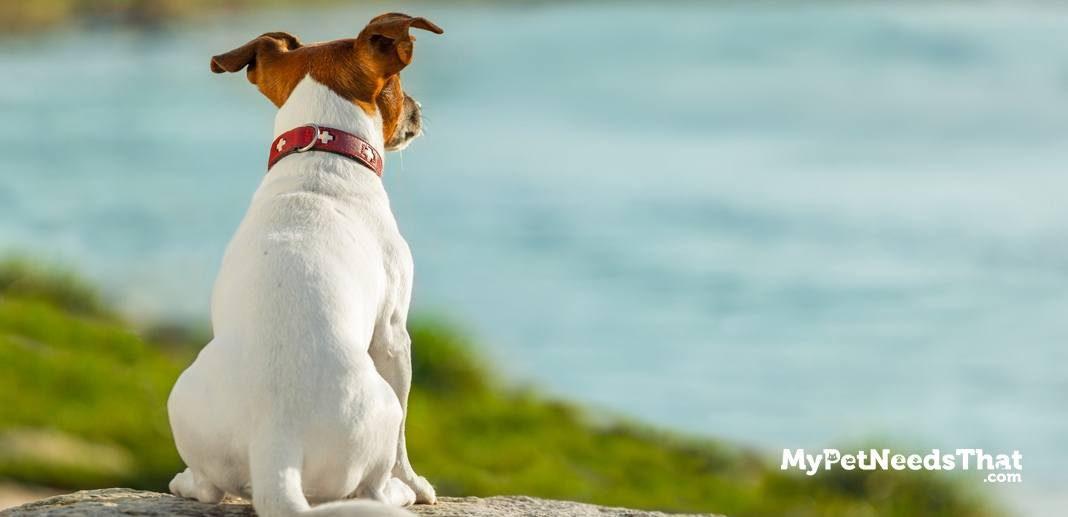 Dog DNA Testing Explained