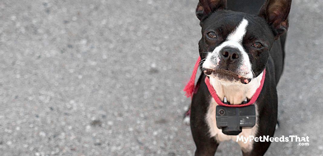 electric dog fences explained