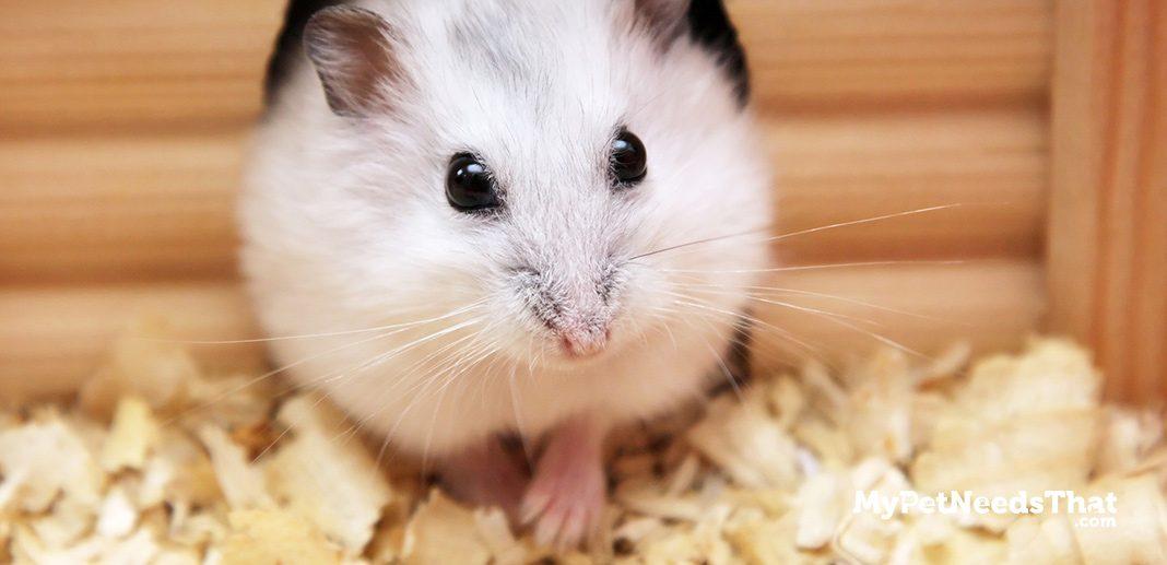 hamster cost