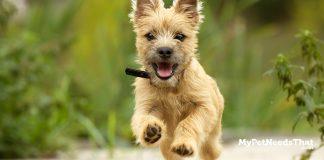dog health tip