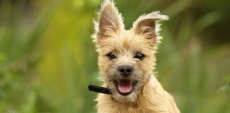 tips to care for your dog's health