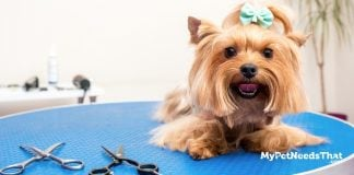 Dog Grooming Questions Explained