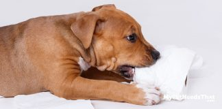 Puppy Teething Survival Tips