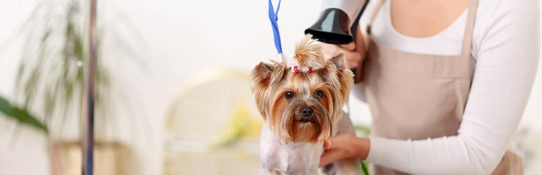 dog-grooming-tips