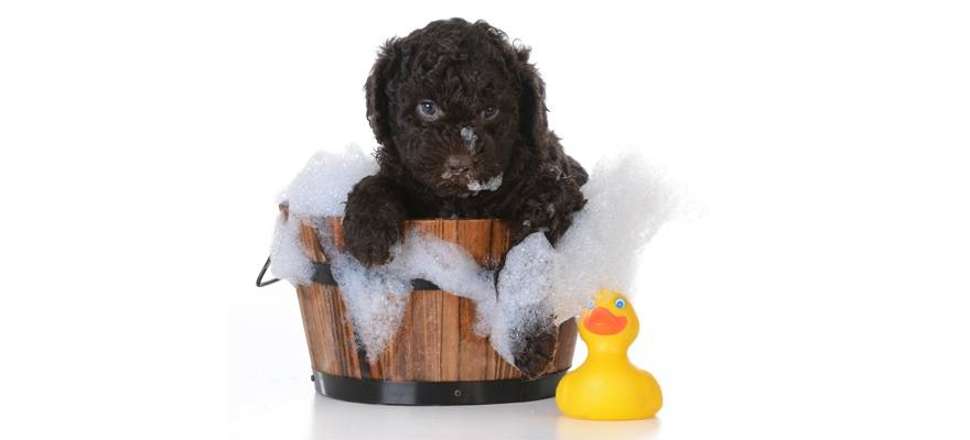 dog shampoo ingredients to avoid