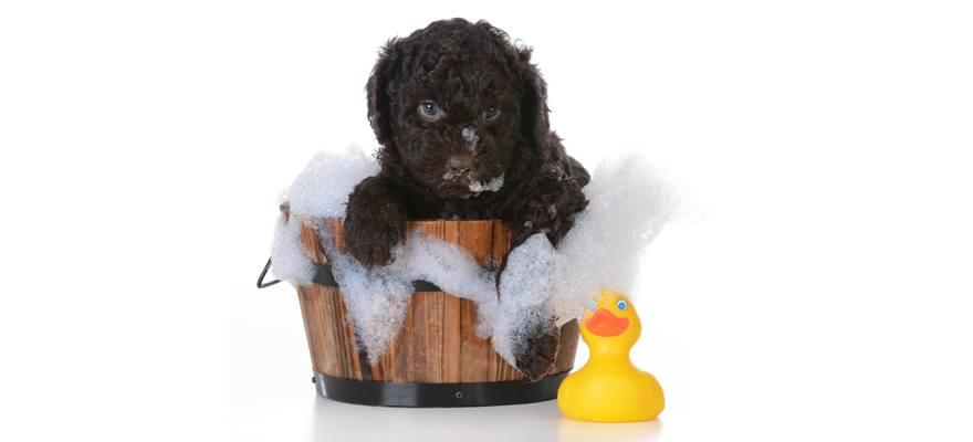 dog shampoo ingredients to avoid