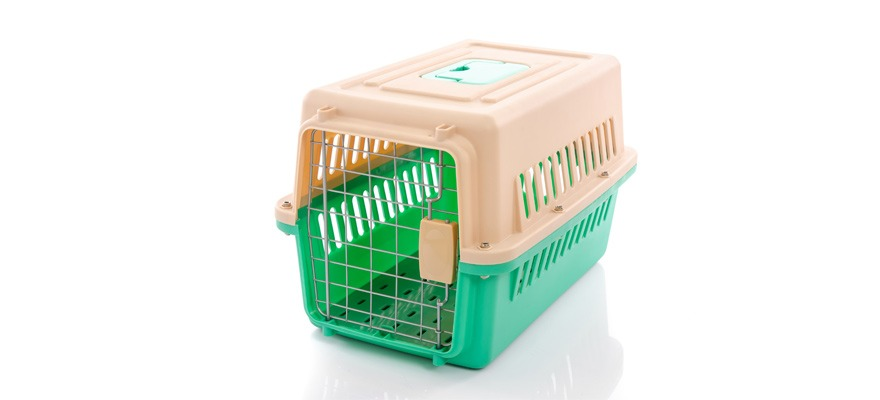factors to consider when buying a dog crate