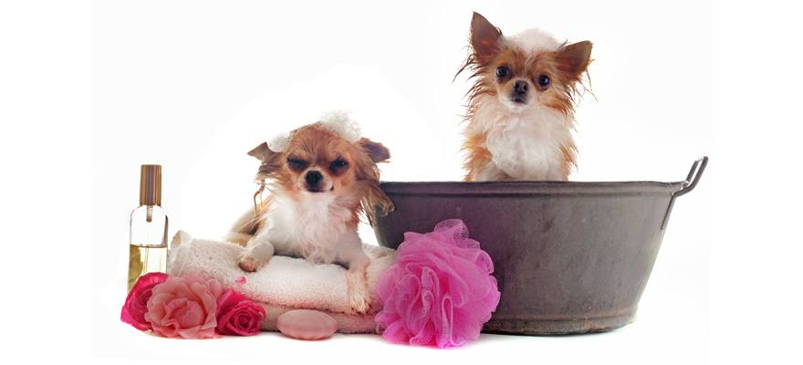 how to choose the right dog shampoo