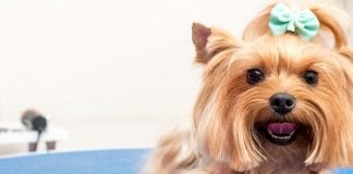 most common dog grooming questions explained