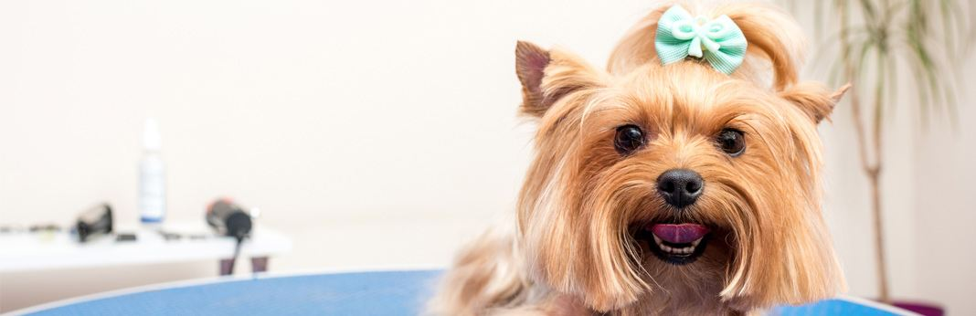 most-common-dog-grooming-questions-explained