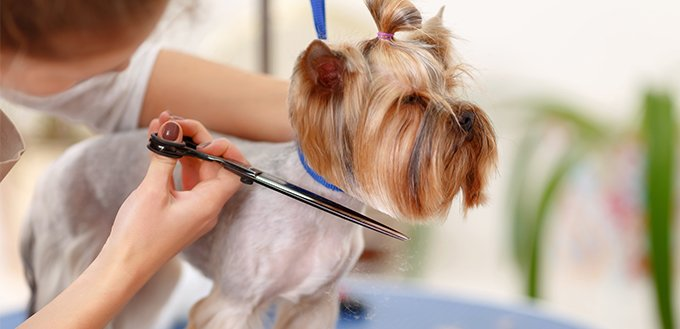 process of grooming