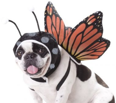 PET20101 Butterfly Dog Costume by Animal Planet