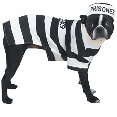 Prison Pooch Dog Costume by Casual Canine