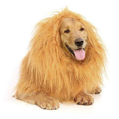 Lion Mane by Furry Fido