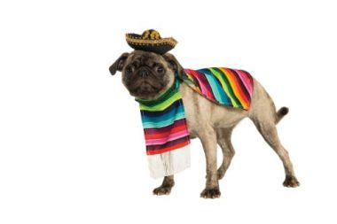 Pet Mexican Poncho by Rubie's