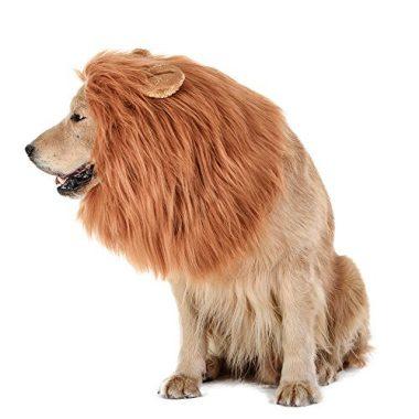 Dog Lion Mane by TOMSENN