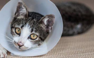 best cat flea treatments