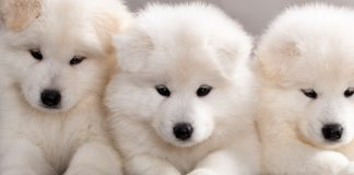 best dog foods for puppies