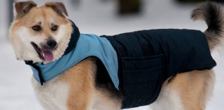 best gadgets every dog owner needs