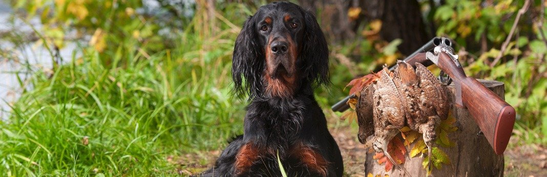 best-hunting-dogs